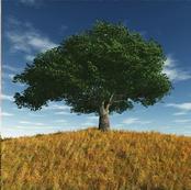 arbre-ete.jpg