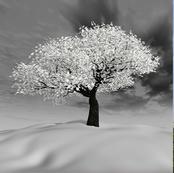 arbre-hiver.jpg