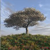 arbre-printemps.jpg